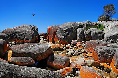 Binalong Rocks, Tasmania by bevanimage