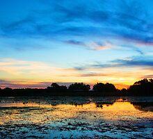 The Birds of Knuckey Lagoon by Keith McGuinness