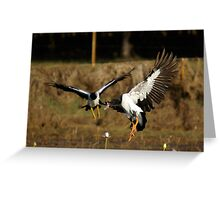 Magpie Geese flock in Greeting Card