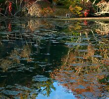 Reflection pond in CSH by Robyn Bohlen