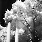 Columns by Nikki Trexel