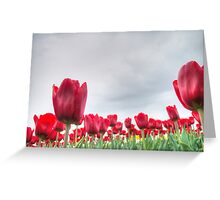 Red tulips 4 Greeting Card