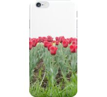 Red tulips 2 iPhone Case/Skin