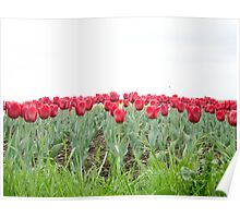Red tulips 2 Poster