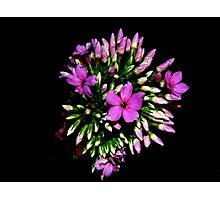 Night Flower Purple Photographic Print