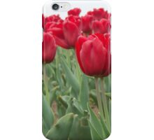 Red tulips 6 iPhone Case/Skin