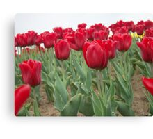 Red tulips 6 Canvas Print