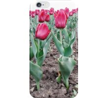 Red tulips 7 iPhone Case/Skin