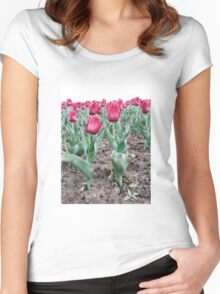 Red tulips 7 Women's Fitted Scoop T-Shirt