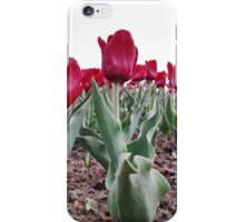 Red tulips 8 iPhone Case/Skin