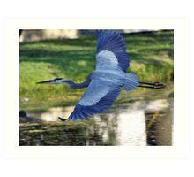 BLUE HERON FLIGHT Art Print