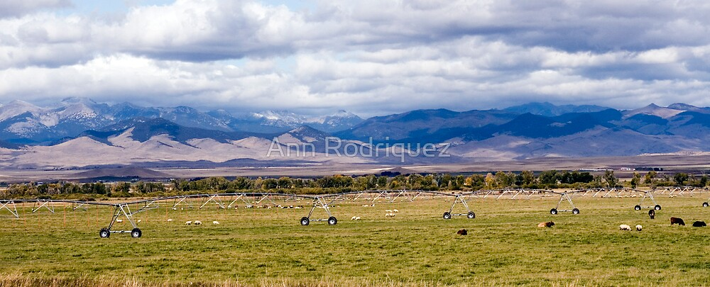 God's Country by Ann Rodriquez
