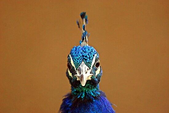 You talkin' to me?? by Jen Wahl