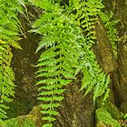 Ferns So Soft by Marilyn Cornwell