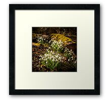 Snowdrop Woods Welford Framed Print