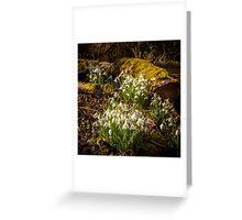 Snowdrop Woods Welford Greeting Card