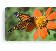 Food for Monarchs Canvas Print