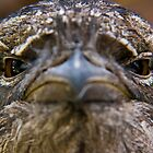Tawny Frog Mouth  by PaulsPhotos