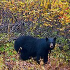 Ready for Winter (Best viewed at Fullsize) by DawsonImages