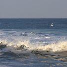 Ocean City 15 by Nancy Polanski
