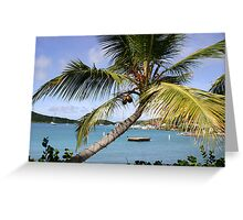 Palm In Paradise Greeting Card