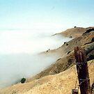Fog in California by Larry Llewellyn