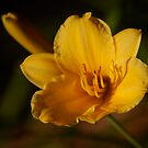 Day Lily At Sunset by Pamela Hubbard
