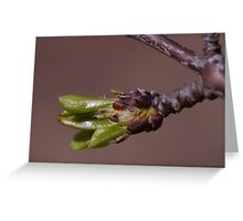 This was Spring: Seems years ago! Greeting Card