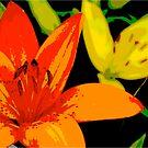 Tiger Lily  by Pamela Hubbard