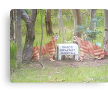 Aussy comedt a dingoes breakfast Metal Print