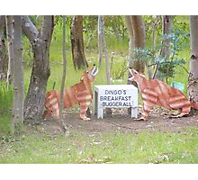 Aussy comedt a dingoes breakfast Photographic Print