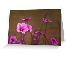 Geranium No 1 Greeting Card