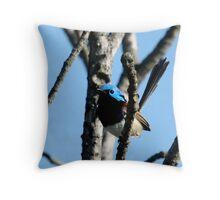 Varigated Fairy Wren, Bigma2 Throw Pillow