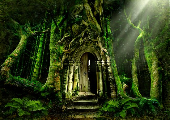The Emerald Forest by Angie Latham
