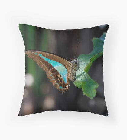 Blue Triangle - Graphium sarpedon   Throw Pillow