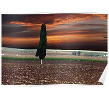 Stormy Day Cypress Poster