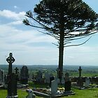Graveyard Monkey-puzzle by Alan Hogan