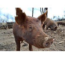 Face of a Boar Photographic Print