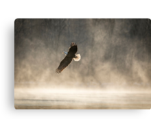 Warming Sunrise With An American Bald Eagle Canvas Print