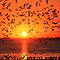 GULLS AT SUNSET by Chuck Wickham