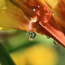 Nature's Perfect Gems by Susan van Zyl