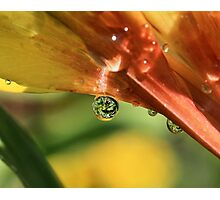 Nature's Perfect Gems Photographic Print