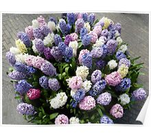 Assorted hyacinths Poster