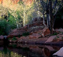 Arizona Reflections by Varinia   - Globalphotos