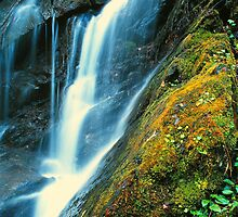 FALLS,TREMONT by Chuck Wickham
