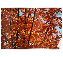Flaming Leaves of Autumn Poster