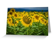 Sunflower Brilliance Greeting Card