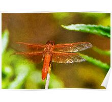 Stylized photo of  red dragonfly on plant in Kit Carson Park in Escondido, CA US. Poster