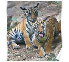 Stylized photo of Malayan tiger cubs.   Poster