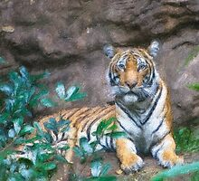 Stylized photo of a Malayan female tiger lying on rocky ledge.   by NaturaLight